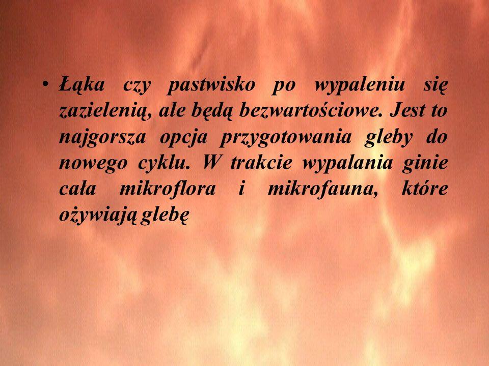 Łąka czy pastwisko po wypaleniu się zazielenią, ale będą bezwartościowe.