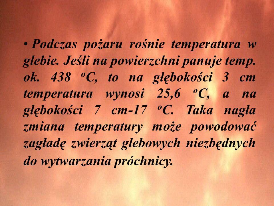 Podczas pożaru rośnie temperatura w glebie. Jeśli na powierzchni panuje temp.