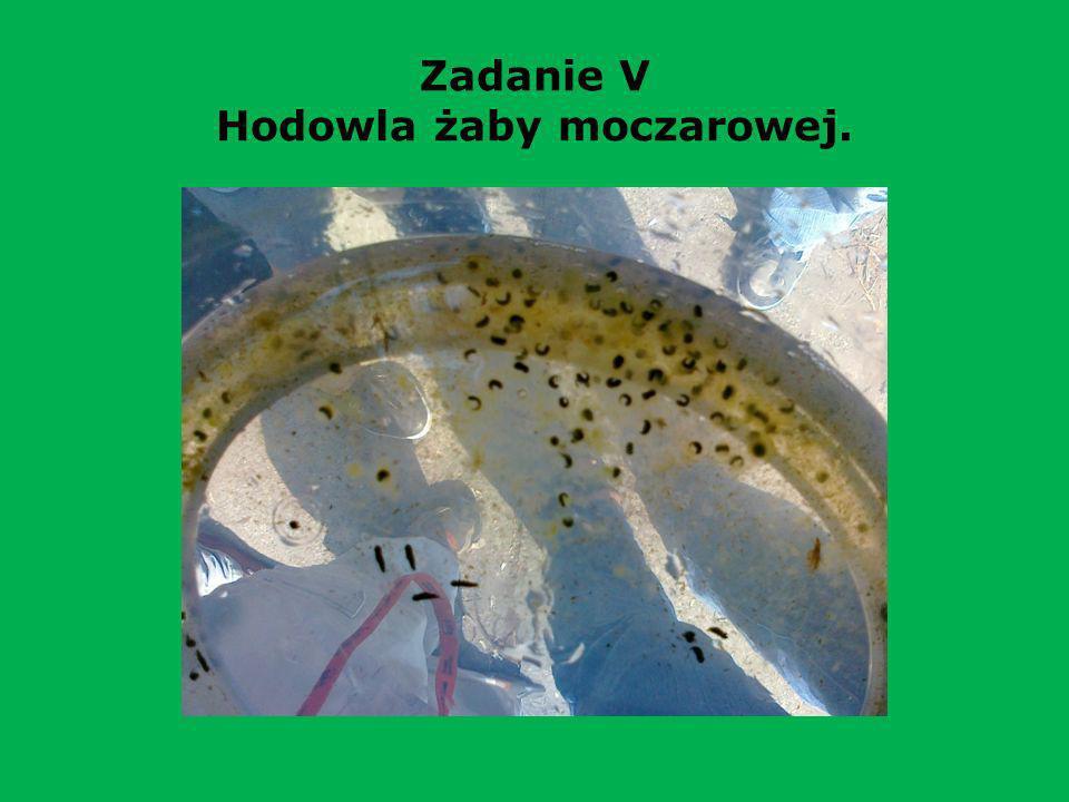 Rezultat pracy uczniów www.projektyleba.cba.pl www.projektyleba.cba.pl