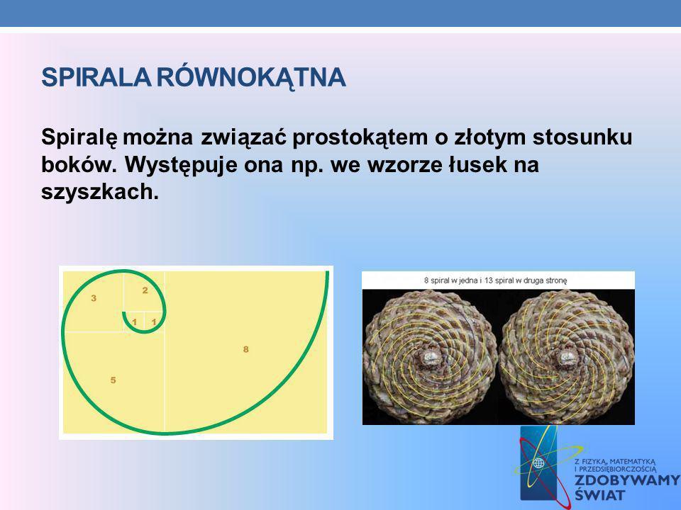 SPIRALA RÓWNOKĄTNA Spiralę można związać prostokątem o złotym stosunku boków. Występuje ona np. we wzorze łusek na szyszkach.