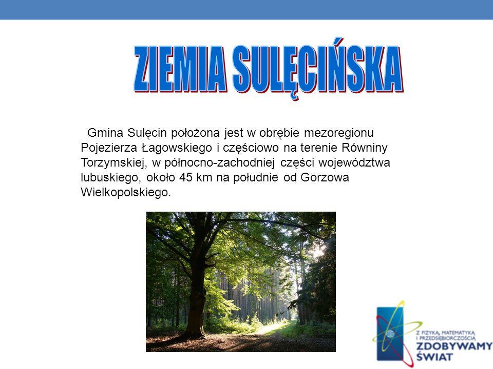 Gmina Sulęcin położona jest w obrębie mezoregionu Pojezierza Łagowskiego i częściowo na terenie Równiny Torzymskiej, w północno-zachodniej części województwa lubuskiego, około 45 km na południe od Gorzowa Wielkopolskiego.