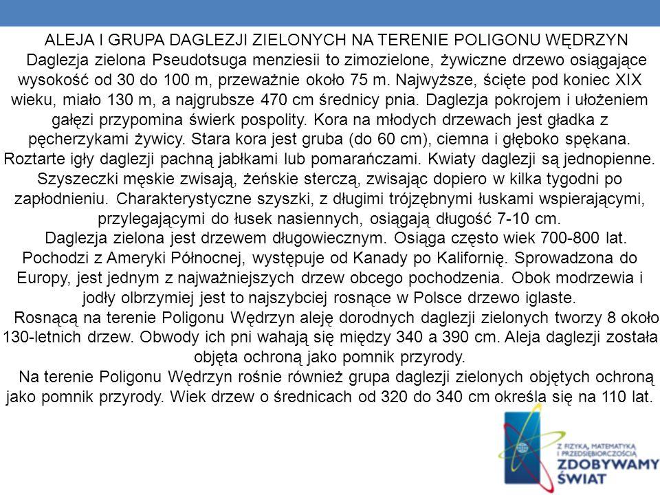 ALEJA I GRUPA DAGLEZJI ZIELONYCH NA TERENIE POLIGONU WĘDRZYN Daglezja zielona Pseudotsuga menziesii to zimozielone, żywiczne drzewo osiągające wysokość od 30 do 100 m, przeważnie około 75 m.