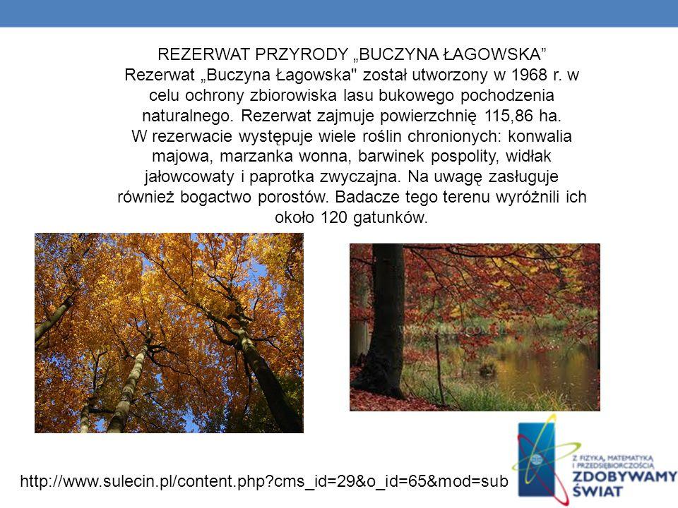 REZERWAT PRZYRODY BUCZYNA ŁAGOWSKA Rezerwat Buczyna Łagowska został utworzony w 1968 r.