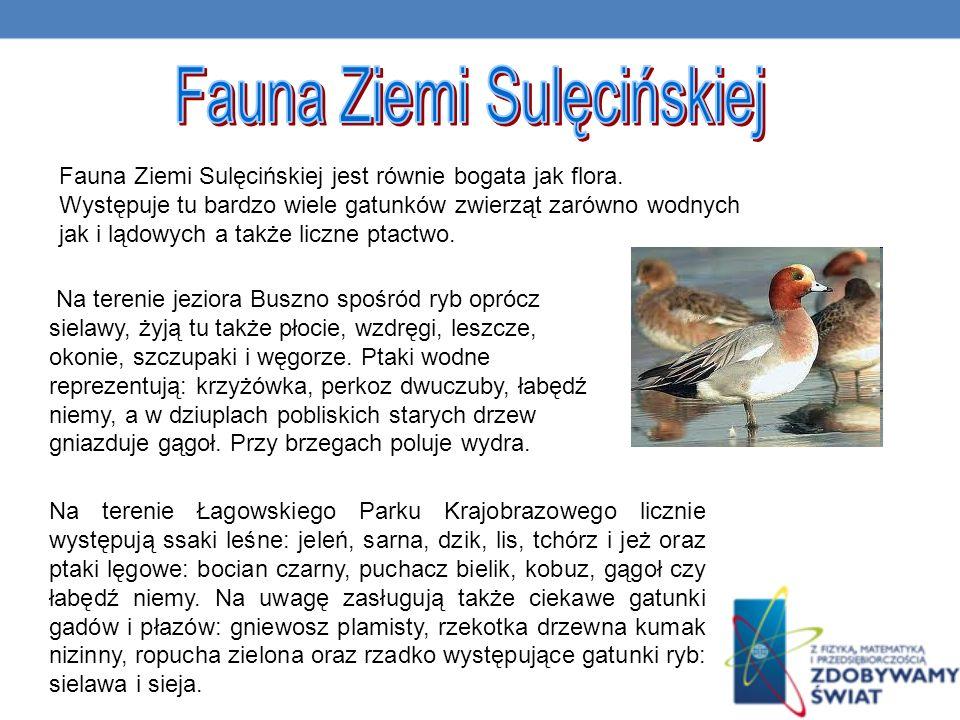 Na terenie jeziora Buszno spośród ryb oprócz sielawy, żyją tu także płocie, wzdręgi, leszcze, okonie, szczupaki i węgorze.