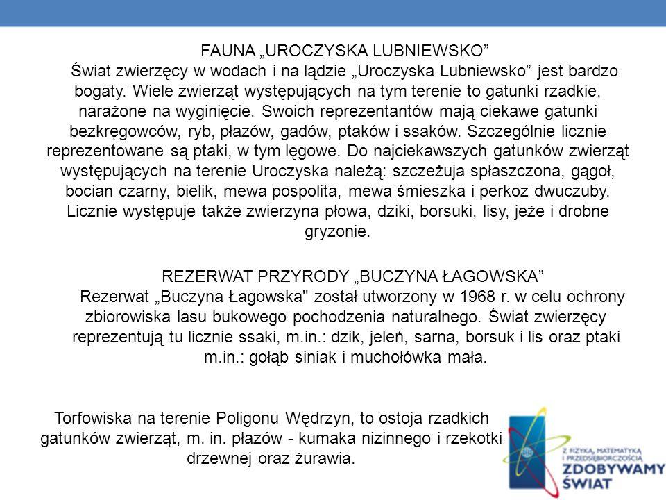 FAUNA UROCZYSKA LUBNIEWSKO Świat zwierzęcy w wodach i na lądzie Uroczyska Lubniewsko jest bardzo bogaty.
