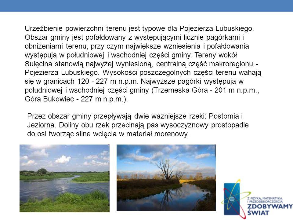 Urzeźbienie powierzchni terenu jest typowe dla Pojezierza Lubuskiego.
