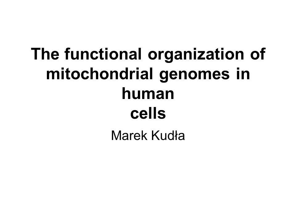 S6 - białko rybosomalne z rybosomu cytoplazmatycznego NAC – chaperon cytoplazmatyczny uczestniczący w translokacji białka przez błony mt Tom22 – kompleks translokacyjny zewnętrznej błony