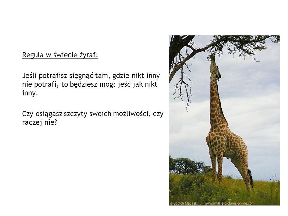 Reguła w świecie żyraf: Jeśli potrafisz sięgnąć tam, gdzie nikt inny nie potrafi, to będziesz mógł jeść jak nikt inny.