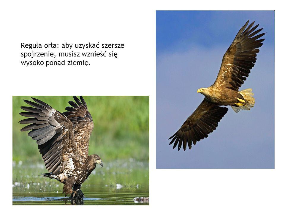 Reguła orła: aby uzyskać szersze spojrzenie, musisz wznieść się wysoko ponad ziemię.