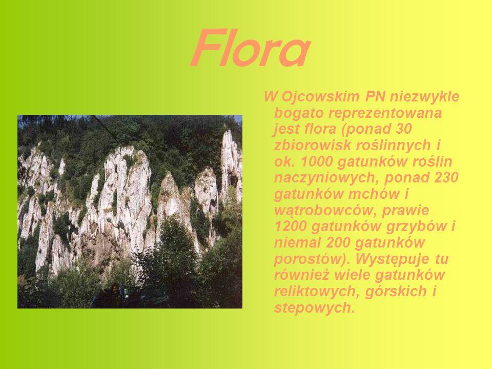 Flora W Ojcowskim PN niezwykle bogato reprezentowana jest flora (ponad 30 zbiorowisk roślinnych i ok. 1000 gatunków roślin naczyniowych, ponad 230 gat