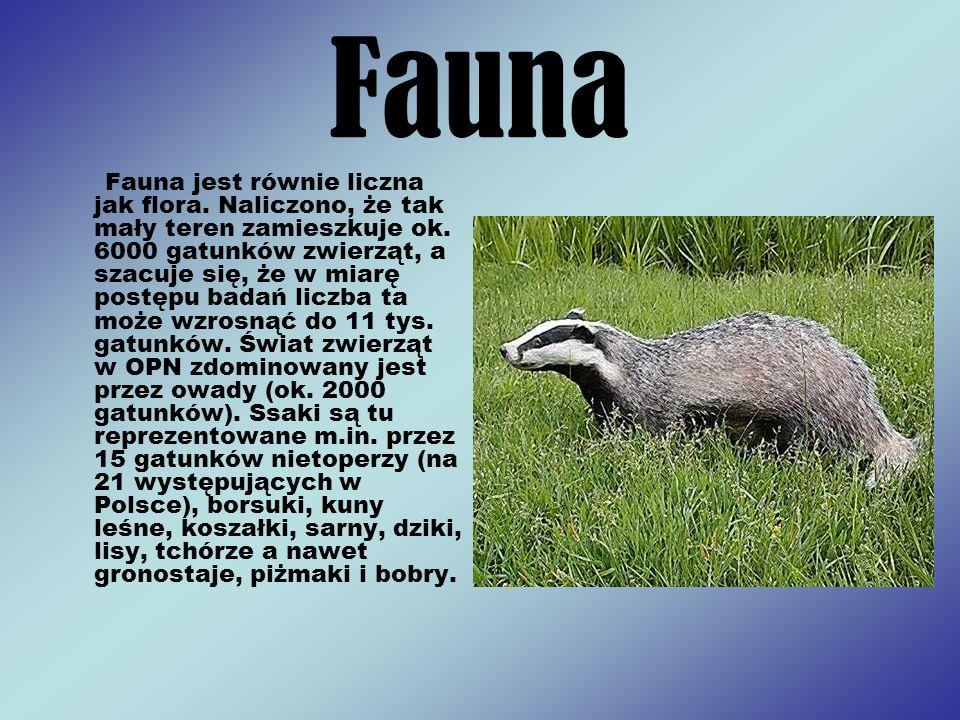 Fauna Fauna jest równie liczna jak flora. Naliczono, że tak mały teren zamieszkuje ok. 6000 gatunków zwierząt, a szacuje się, że w miarę postępu badań