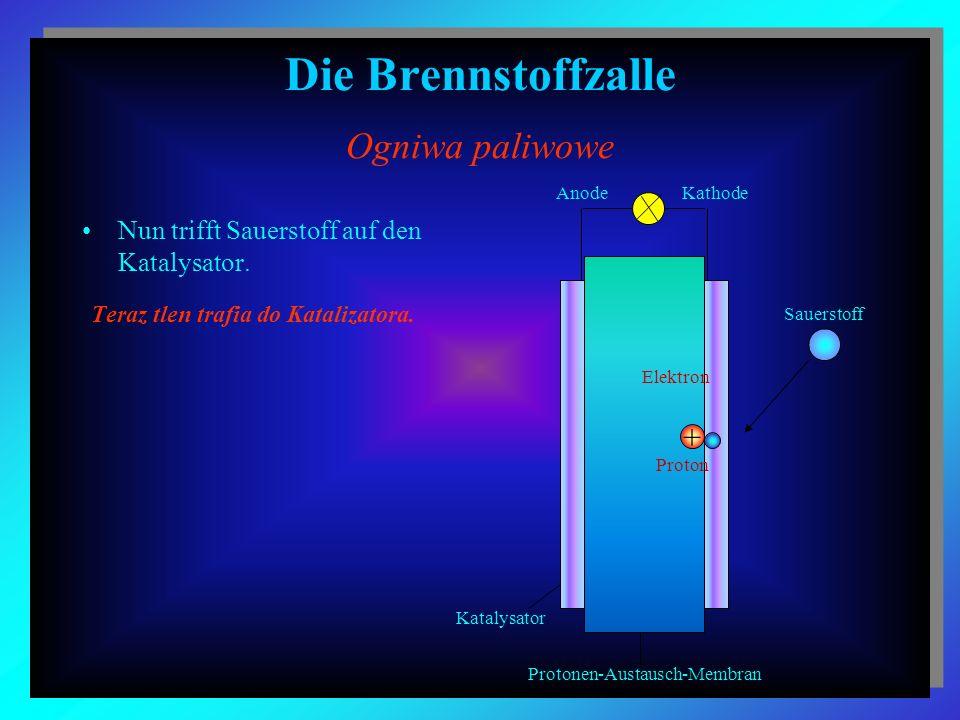 Die Brennstoffzalle Ogniwa paliwowe Nun trifft Sauerstoff auf den Katalysator. Teraz tlen trafia do Katalizatora. Elektron + Proton Sauerstoff Katalys