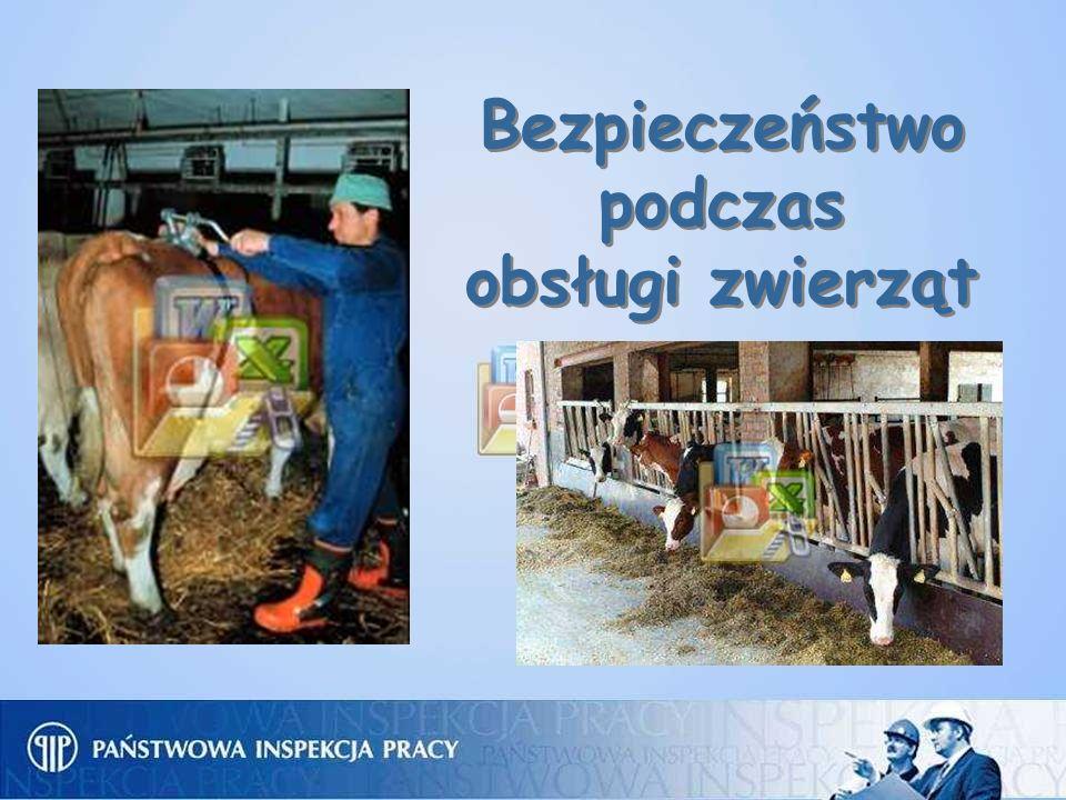 Bezpieczeństwo podczas obsługi zwierząt Bezpieczeństwo podczas obsługi zwierząt