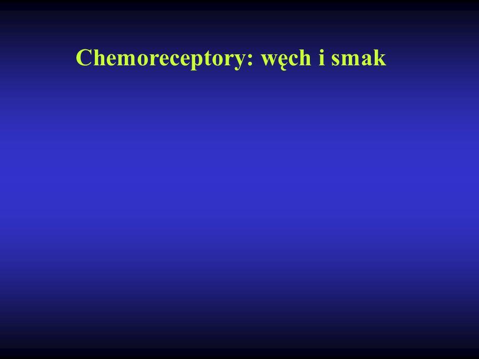 Chemoreceptory: węch i smak