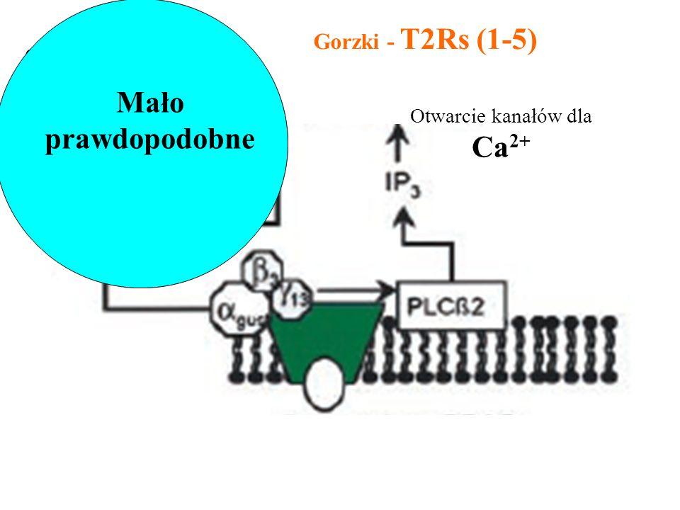 Gorzki - T2Rs (1-5) Otwarcie kanałów dla Ca 2+ Otwarcie kanałów blokowanych przez cAMP Mało prawdopodobne
