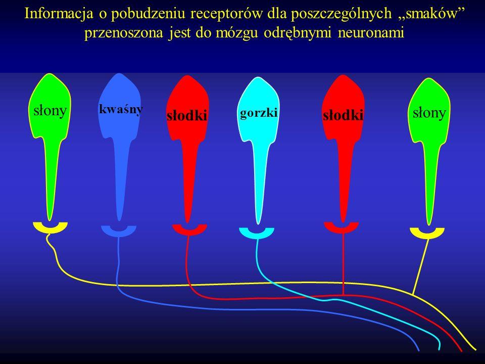 Każda kom. receptorowa smaku posiada receptory dla wielu smaków, ale niski próg pobudzenia ma tylko dla jednego rodzaju (duża ilość danych receptorów)