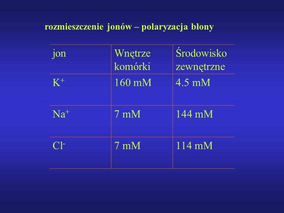 rozmieszczenie jonów – polaryzacja błony jonWnętrze komórki Środowisko zewnętrzne K+K+ 160 mM4.5 mM Na + 7 mM144 mM Cl - 7 mM114 mM