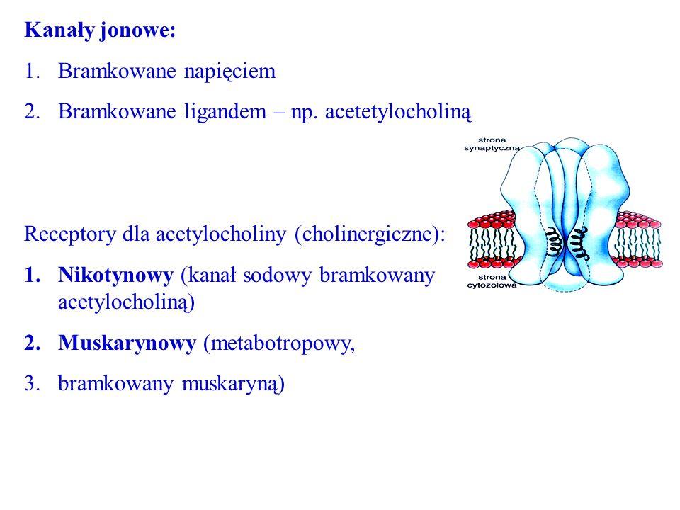 Kanały jonowe: 1.Bramkowane napięciem 2.Bramkowane ligandem – np. acetetylocholiną Receptory dla acetylocholiny (cholinergiczne): 1.Nikotynowy (kanał