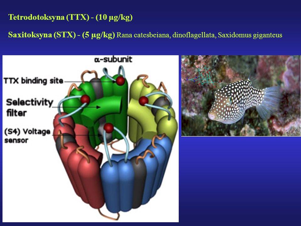 Tetrodotoksyna (TTX) - (10 µg/kg) Saxitoksyna (STX) - (5 µg/kg) Rana catesbeiana, dinoflagellata, Saxidomus giganteus