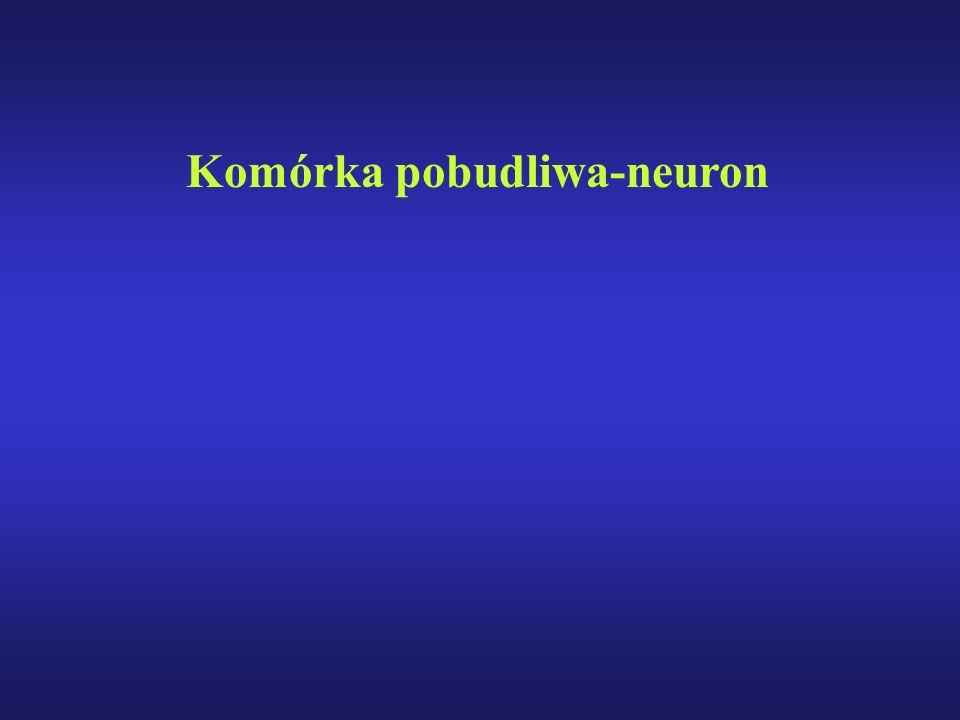 Komórka pobudliwa-neuron