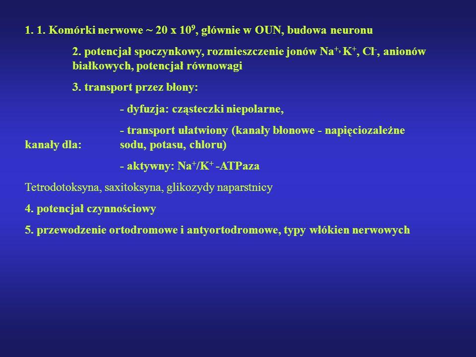 1. 1. Komórki nerwowe ~ 20 x 10 9, głównie w OUN, budowa neuronu 2. potencjał spoczynkowy, rozmieszczenie jonów Na +, K +, Cl -, anionów białkowych, p