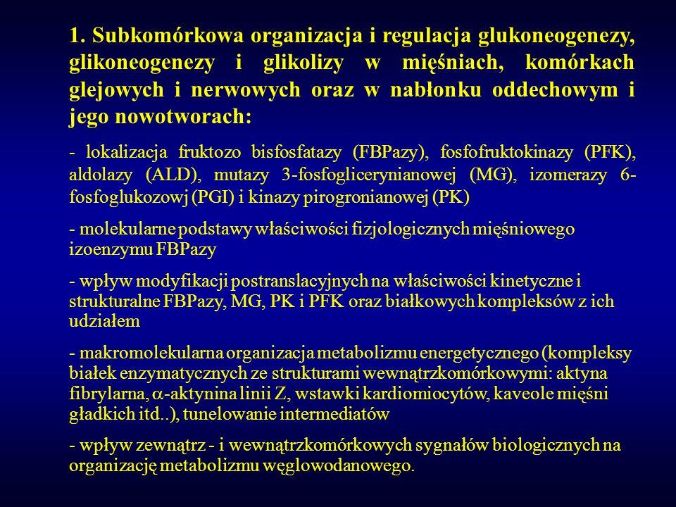 1. Subkomórkowa organizacja i regulacja glukoneogenezy, glikoneogenezy i glikolizy w mięśniach, komórkach glejowych i nerwowych oraz w nabłonku oddech