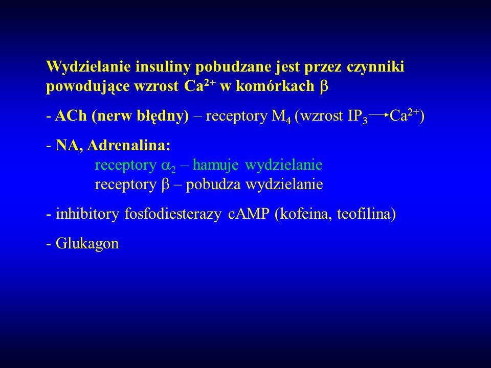 Wydzielanie insuliny pobudzane jest przez czynniki powodujące wzrost Ca 2+ w komórkach - ACh (nerw błędny) – receptory M 4 (wzrost IP 3 Ca 2+ ) - NA,
