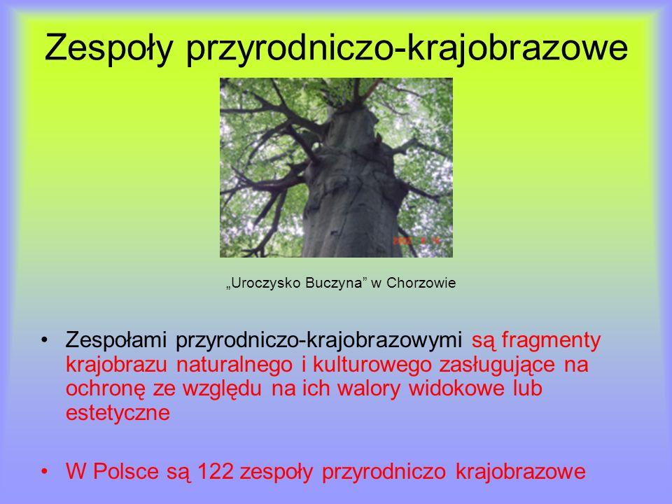 Zespoły przyrodniczo-krajobrazowe Uroczysko Buczyna w Chorzowie Zespołami przyrodniczo-krajobrazowymi są fragmenty krajobrazu naturalnego i kulturoweg