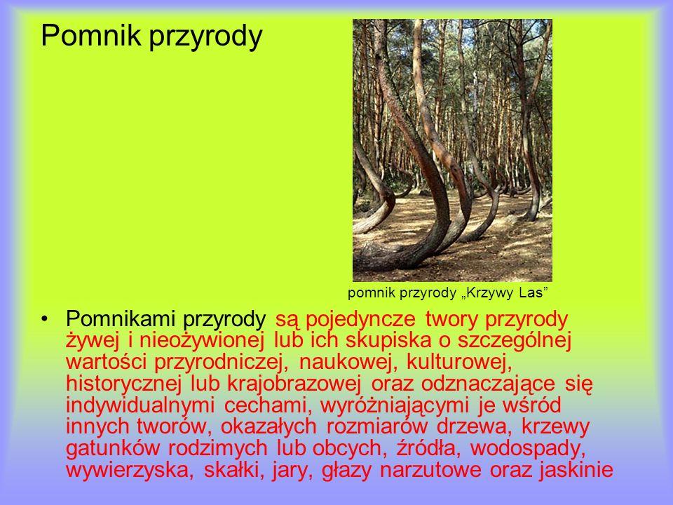 Pomnik przyrody pomnik przyrody Krzywy Las Pomnikami przyrody są pojedyncze twory przyrody żywej i nieożywionej lub ich skupiska o szczególnej wartośc