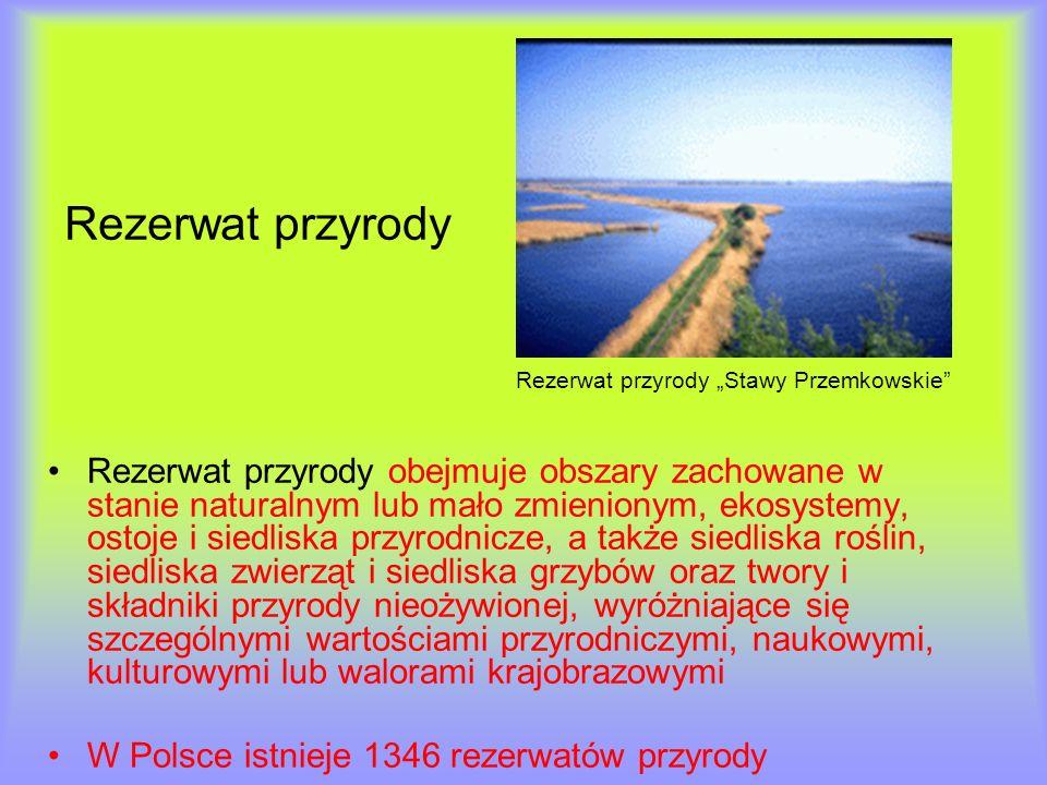 Rezerwat przyrody Rezerwat przyrody Stawy Przemkowskie Rezerwat przyrody obejmuje obszary zachowane w stanie naturalnym lub mało zmienionym, ekosystem