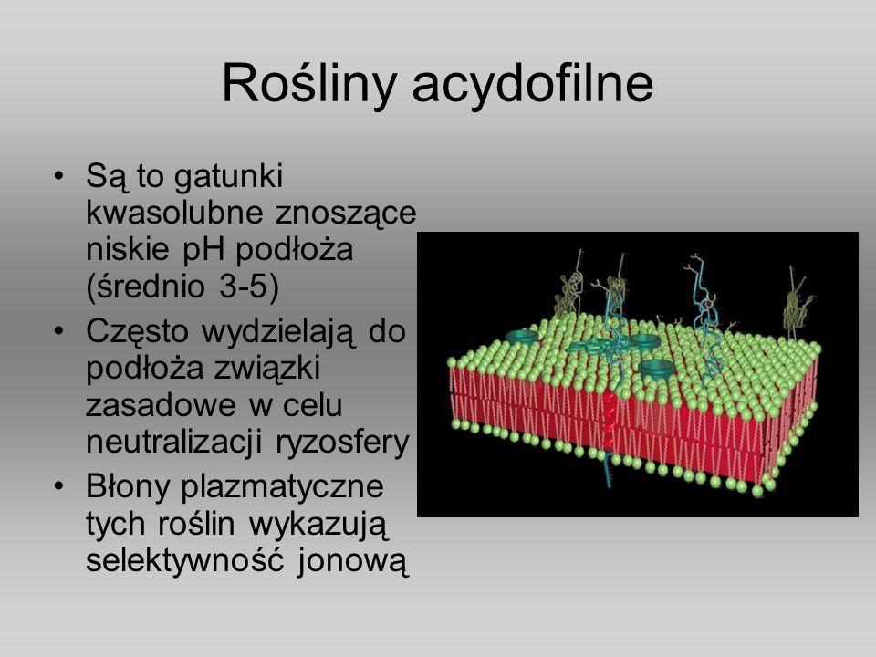 Rośliny acydofilne Są to gatunki kwasolubne znoszące niskie pH podłoża (średnio 3-5) Często wydzielają do podłoża związki zasadowe w celu neutralizacj