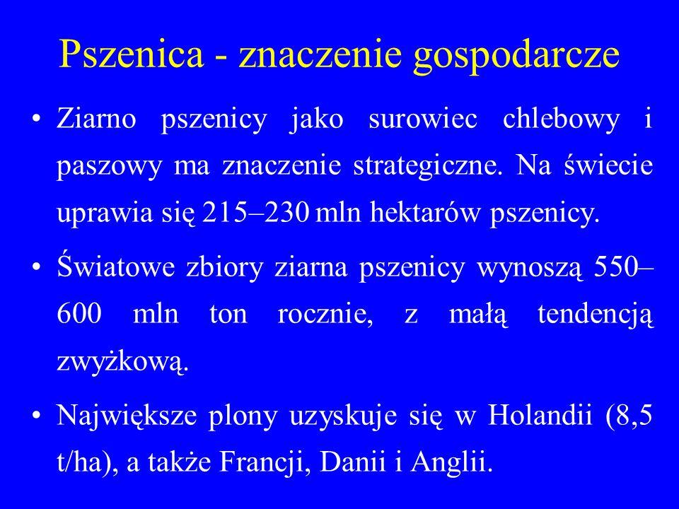 Pszenica - znaczenie gospodarcze Ziarno pszenicy jako surowiec chlebowy i paszowy ma znaczenie strategiczne.
