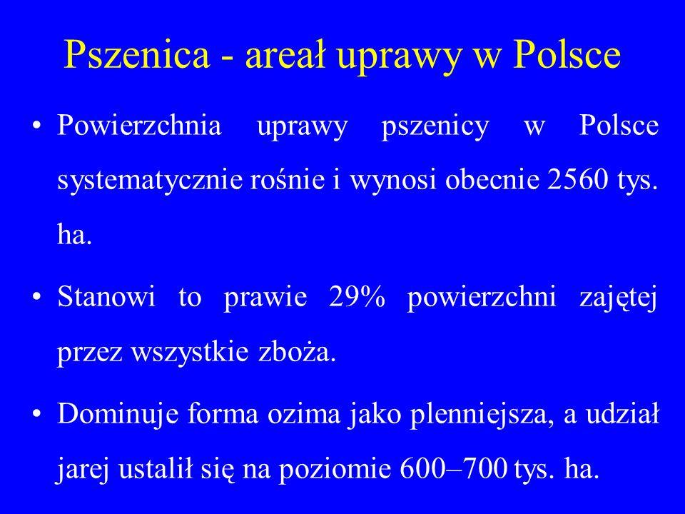 Pszenica - areał uprawy w Polsce Powierzchnia uprawy pszenicy w Polsce systematycznie rośnie i wynosi obecnie 2560 tys.