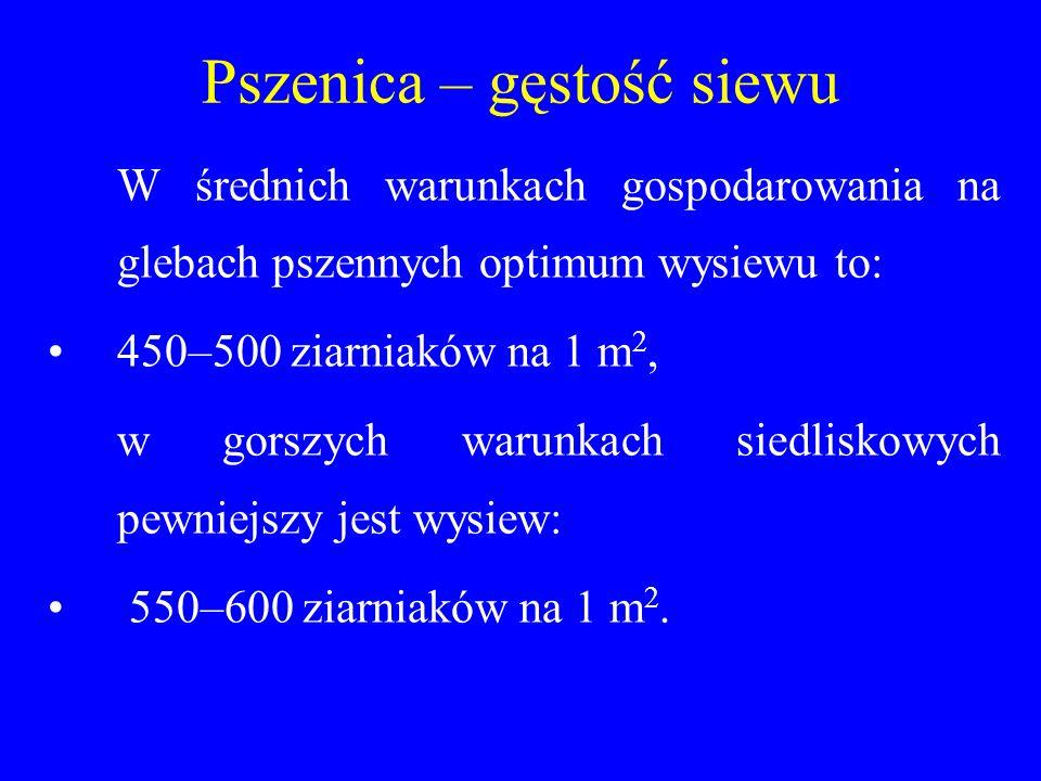 Pszenica – gęstość siewu W średnich warunkach gospodarowania na glebach pszennych optimum wysiewu to: 450–500 ziarniaków na 1 m 2, w gorszych warunkach siedliskowych pewniejszy jest wysiew: 550–600 ziarniaków na 1 m 2.