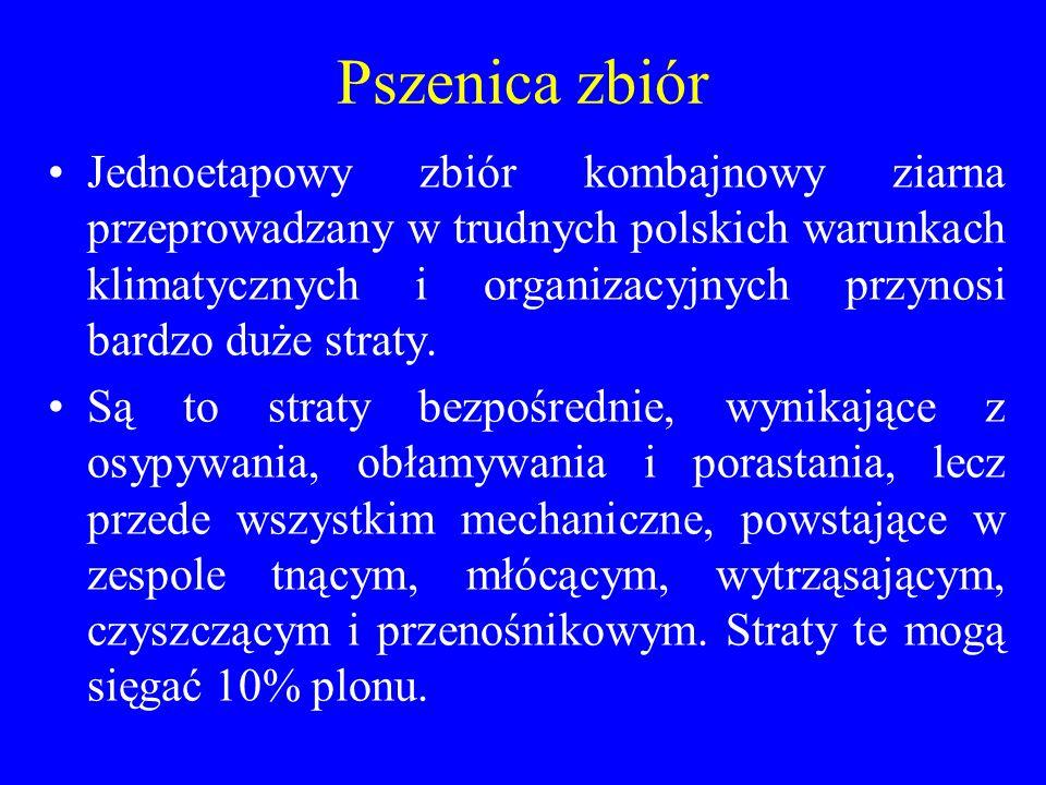 Pszenica zbiór Jednoetapowy zbiór kombajnowy ziarna przeprowadzany w trudnych polskich warunkach klimatycznych i organizacyjnych przynosi bardzo duże straty.