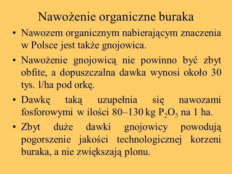 Nawożenie organiczne buraka Nawozem organicznym nabierającym znaczenia w Polsce jest także gnojowica. Nawożenie gnojowicą nie powinno być zbyt obfite,