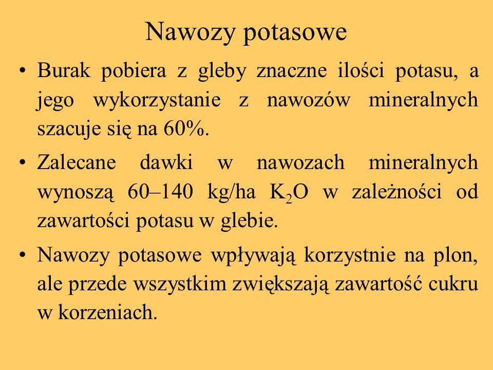 Nawozy potasowe Burak pobiera z gleby znaczne ilości potasu, a jego wykorzystanie z nawozów mineralnych szacuje się na 60%. Zalecane dawki w nawozach