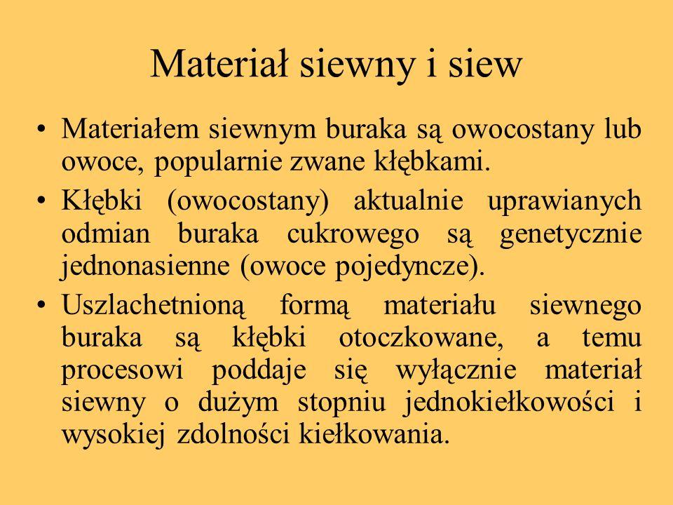 Materiał siewny i siew Materiałem siewnym buraka są owocostany lub owoce, popularnie zwane kłębkami. Kłębki (owocostany) aktualnie uprawianych odmian