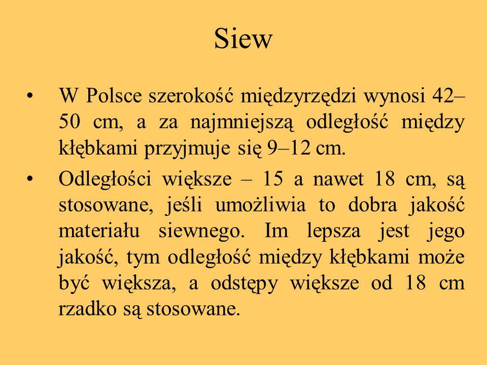 Siew W Polsce szerokość międzyrzędzi wynosi 42– 50 cm, a za najmniejszą odległość między kłębkami przyjmuje się 9–12 cm. Odległości większe – 15 a naw