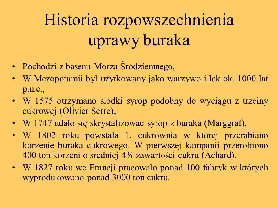 Historia rozpowszechnienia uprawy buraka Pochodzi z basenu Morza Śródziemnego, W Mezopotamii był użytkowany jako warzywo i lek ok. 1000 lat p.n.e., W