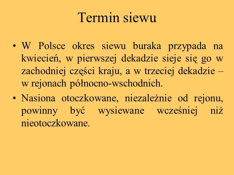 Termin siewu W Polsce okres siewu buraka przypada na kwiecień, w pierwszej dekadzie sieje się go w zachodniej części kraju, a w trzeciej dekadzie – w