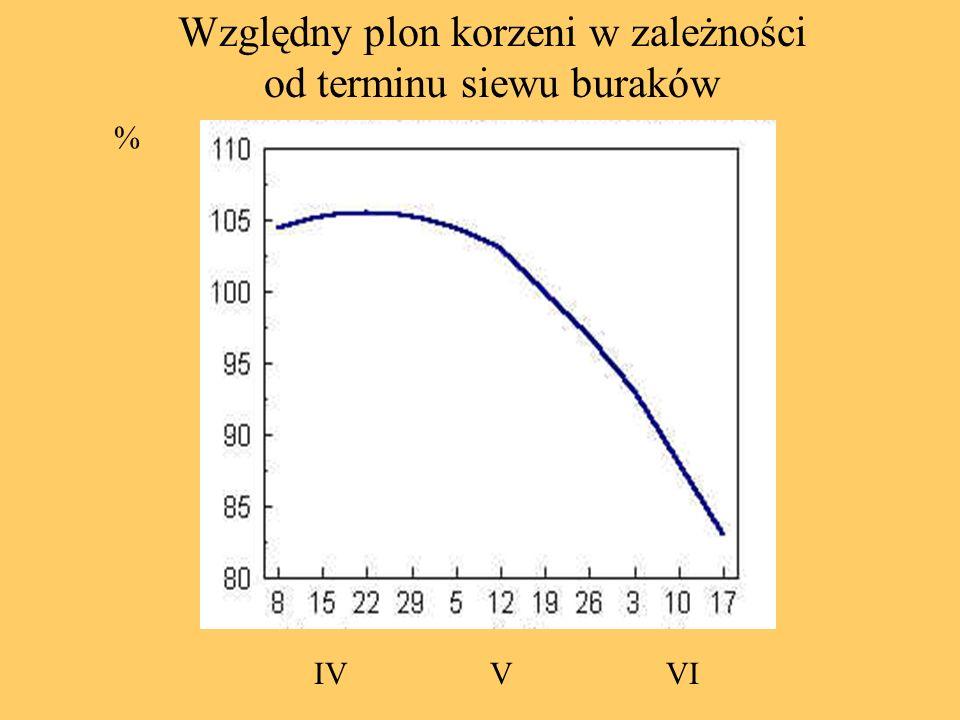 % IVVVI Względny plon korzeni w zależności od terminu siewu buraków