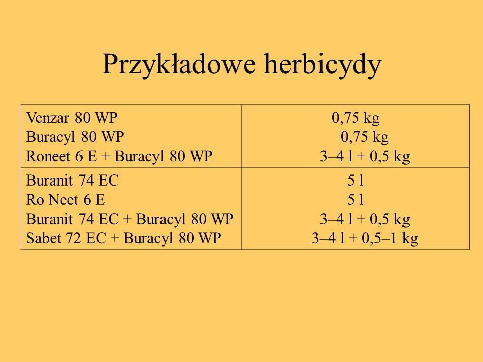 Przykładowe herbicydy Venzar 80 WP Buracyl 80 WP Roneet 6 E + Buracyl 80 WP 0,75 kg 0,75 kg 3–4 l + 0,5 kg Buranit 74 EC Ro Neet 6 E Buranit 74 EC + B