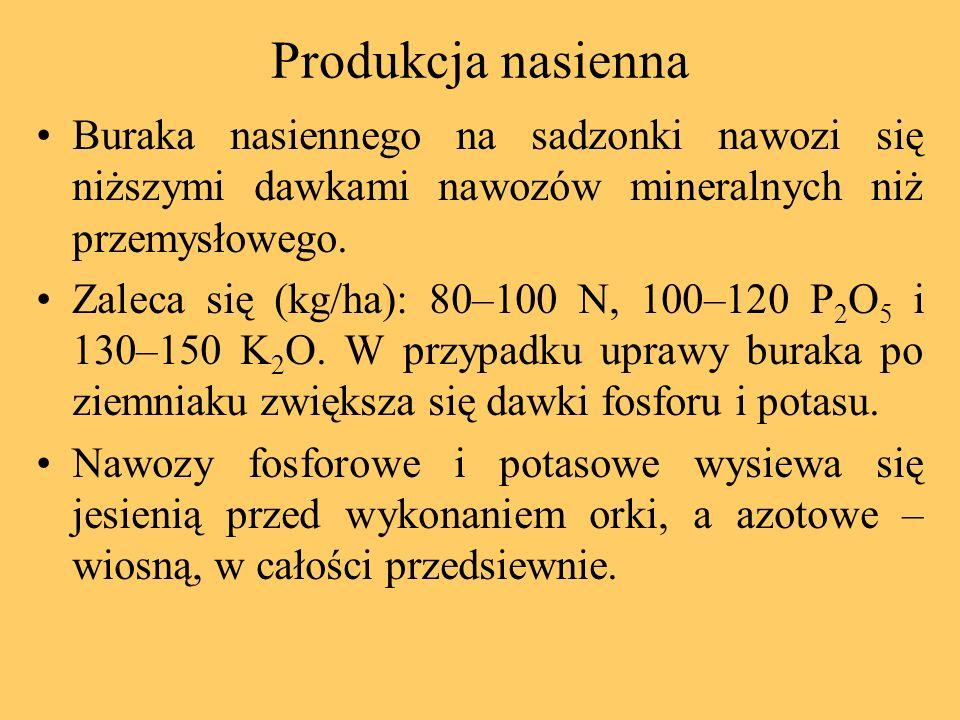 Produkcja nasienna Buraka nasiennego na sadzonki nawozi się niższymi dawkami nawozów mineralnych niż przemysłowego. Zaleca się (kg/ha): 80–100 N, 100–