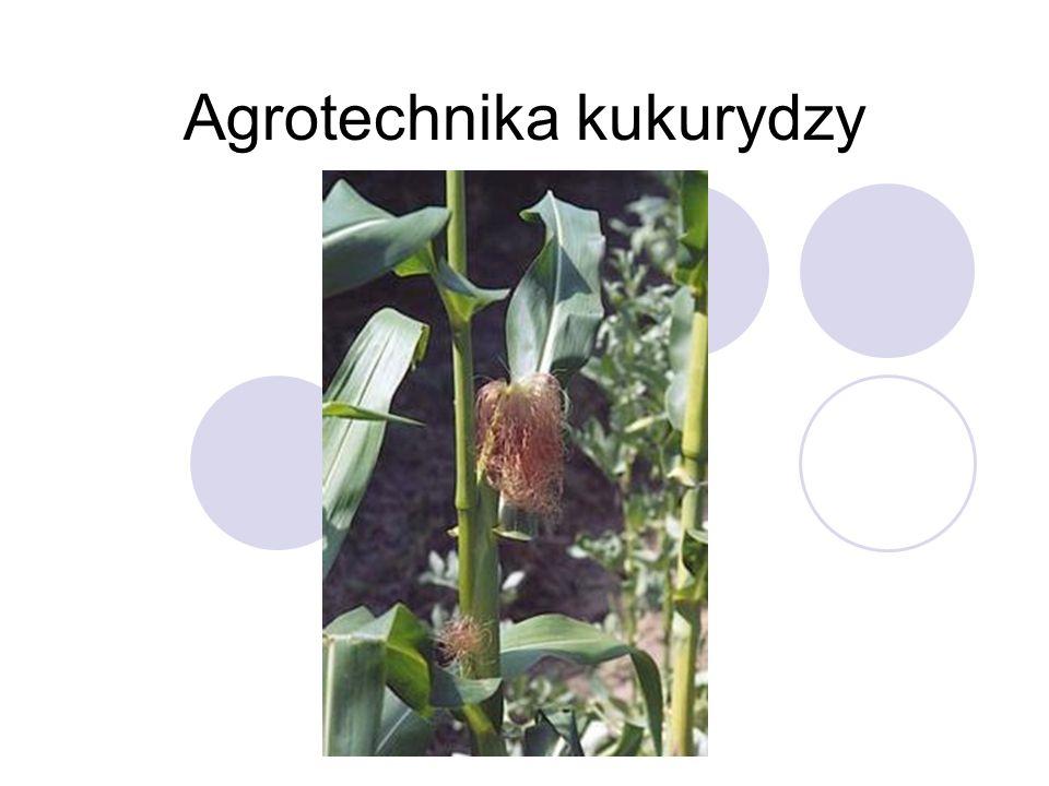 Wymagania wodne Reasumując, można stwierdzić, że klimat charakteryzujący się rocznymi opadami 450– 550 mm i ich korzystnym rozkładem (około 300 mm w okresie wegetacji) stwarza warunki sprzyjające uprawie kukurydzy.