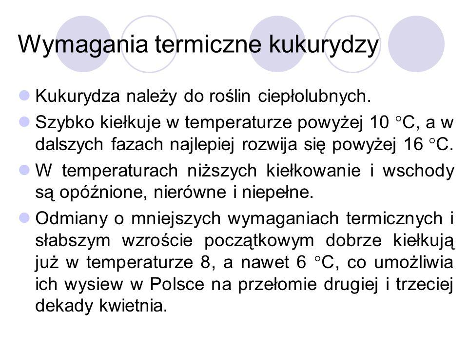 Wymagania termiczne kukurydzy Kukurydza należy do roślin ciepłolubnych. Szybko kiełkuje w temperaturze powyżej 10 C, a w dalszych fazach najlepiej roz