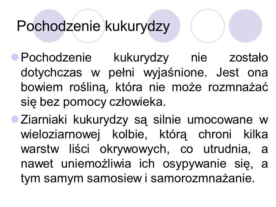 Termin siewu Fenologicznym wskaźnikiem terminu siewu kukurydzy w Polsce jest kwitnienie czeremchy, czereśni, porzeczki czerwonej i mniszka lekarskiego.