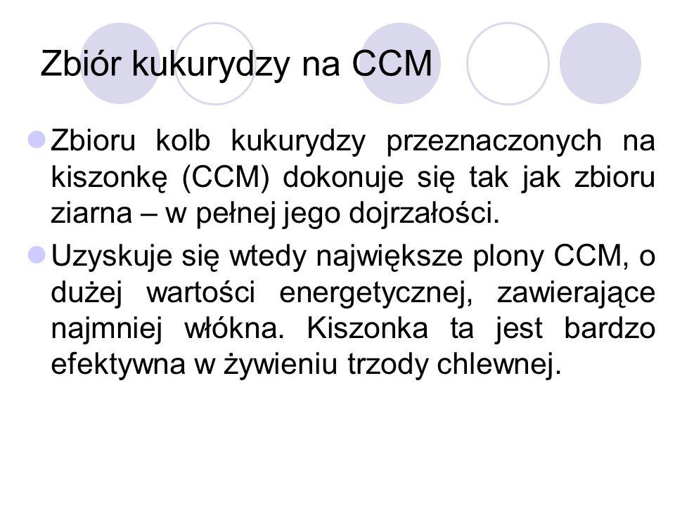 Zbiór kukurydzy na CCM Zbioru kolb kukurydzy przeznaczonych na kiszonkę (CCM) dokonuje się tak jak zbioru ziarna – w pełnej jego dojrzałości. Uzyskuje