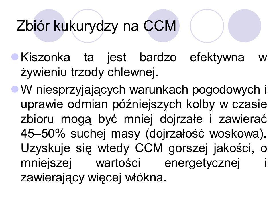 Zbiór kukurydzy na CCM Kiszonka ta jest bardzo efektywna w żywieniu trzody chlewnej. W niesprzyjających warunkach pogodowych i uprawie odmian późniejs