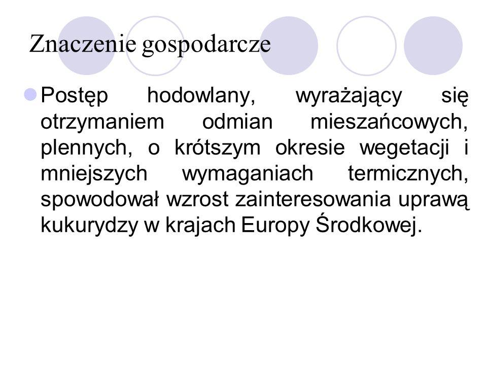 Znaczenie gospodarcze W Polsce, w 1997 r.uprawiano kukrydzę na powierzchni około 300 tys.